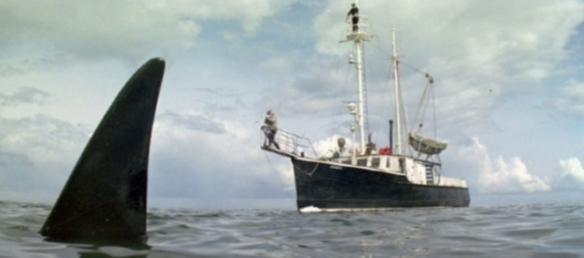 Orca_005